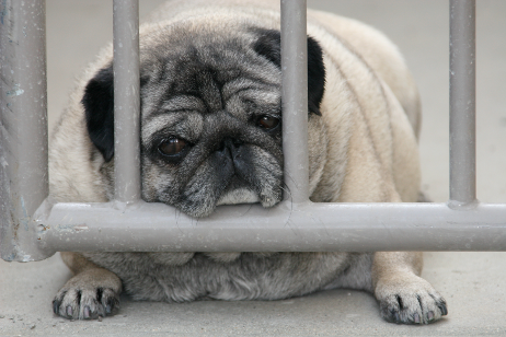 http://bit.ly/pug-on-gate